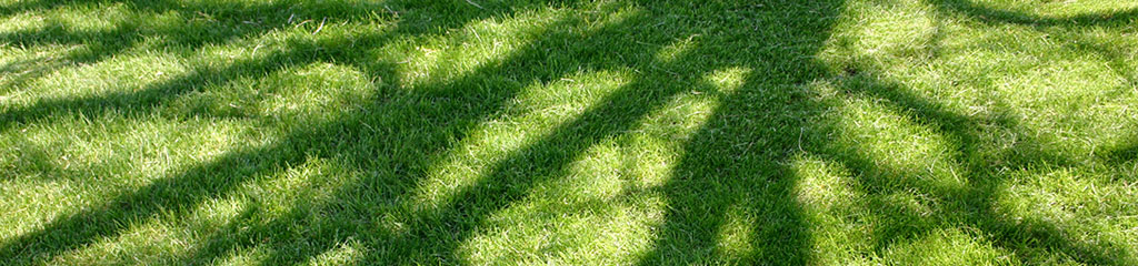 Grass with shadow of trees in the sunshine