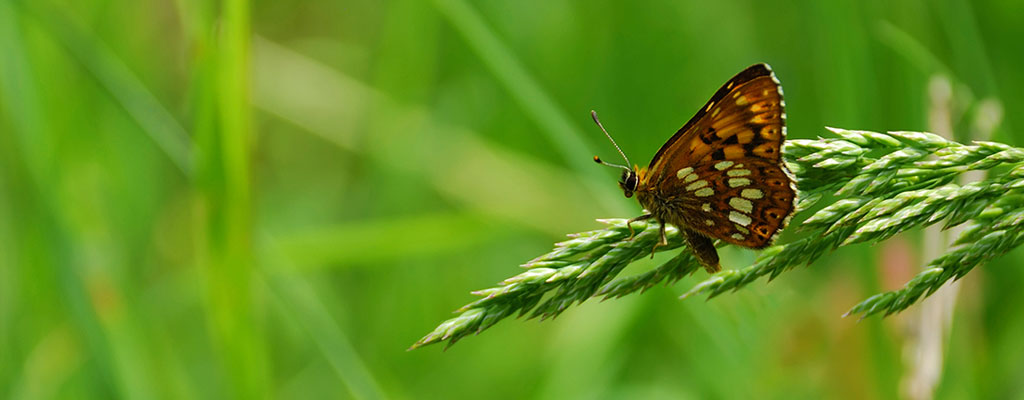 Butterfly sitting on a long piece of grass