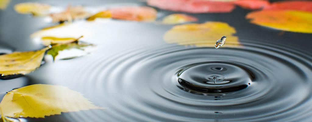Water droplet dropping into a pound of water surrounded by fallen leaves