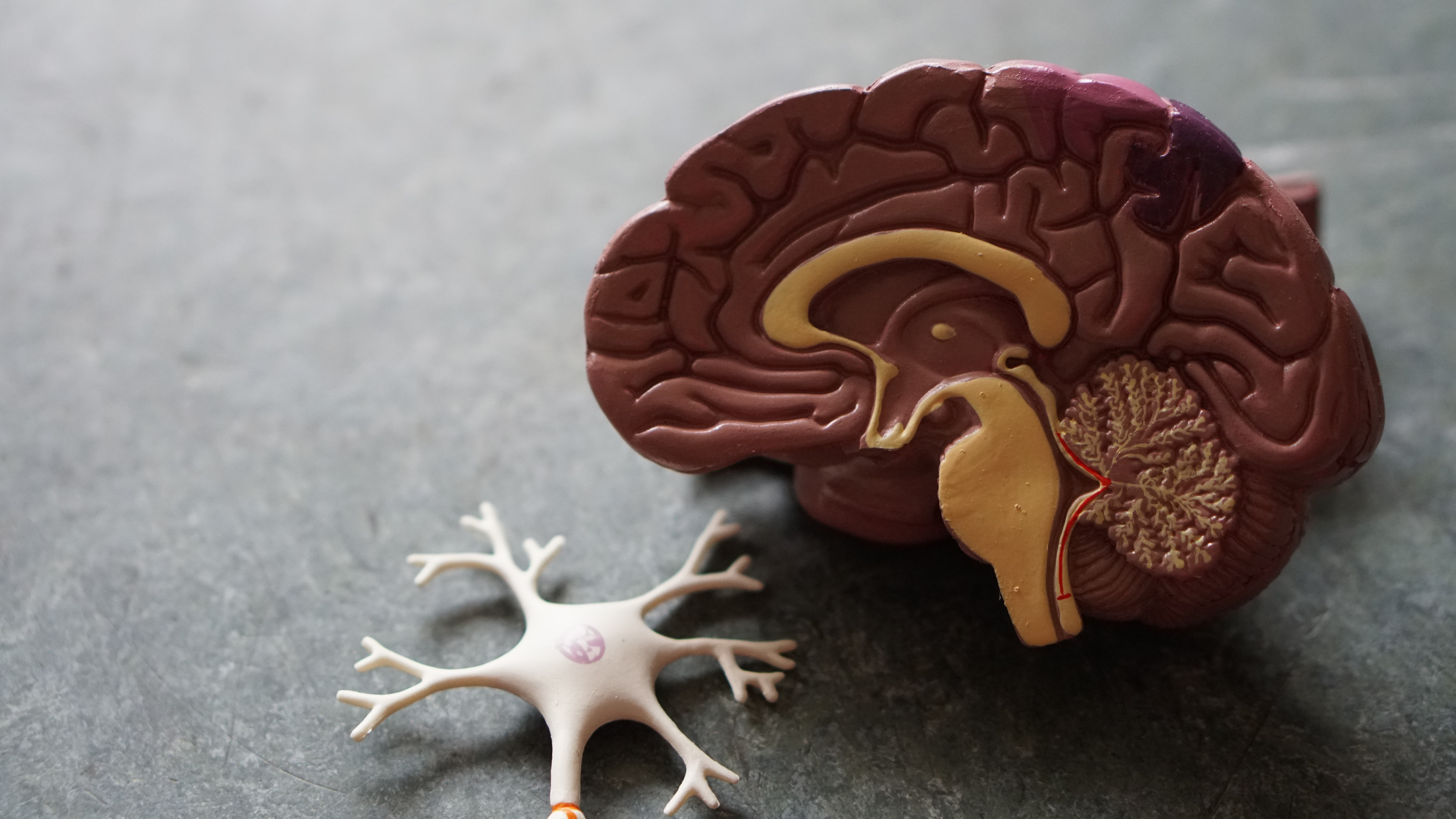 generic picture of a model of a brain